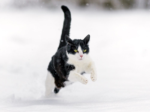 Black Cat Running Clipart