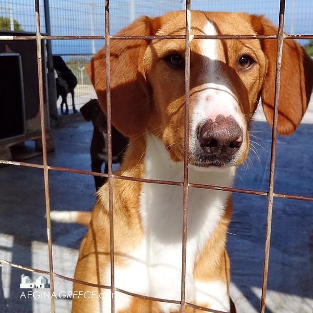 Animal Protection Aegina Agistri has a stray animal neuter
