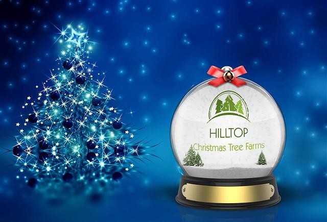 hilltop christmas tree farms flickr - Hilltop Christmas