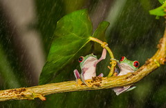 natural-umbrella-shelter-rain-animal-photography-8__880