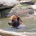 Bronx Zoo_2015 05 24_0150