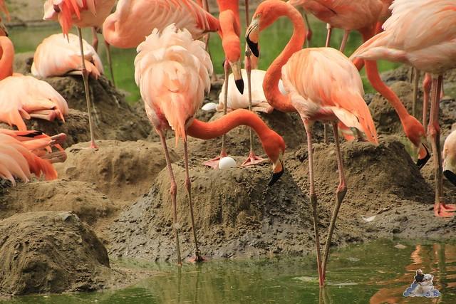 Tierpark Berlin 09.05.2015  129
