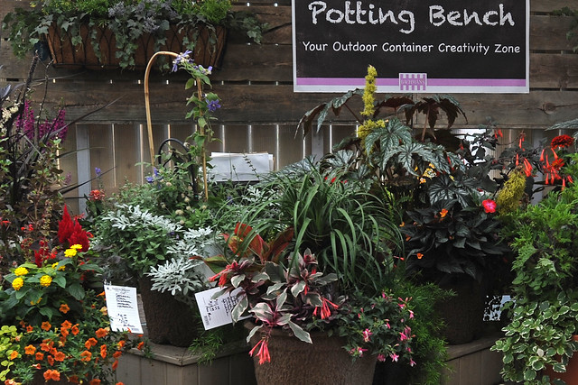 potting bench plants at Bachman's
