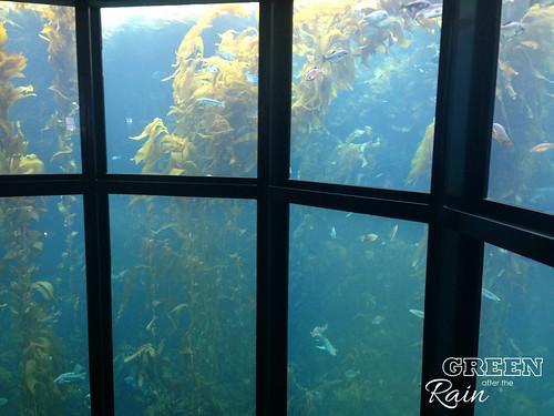 160703e Kelp Forest _07