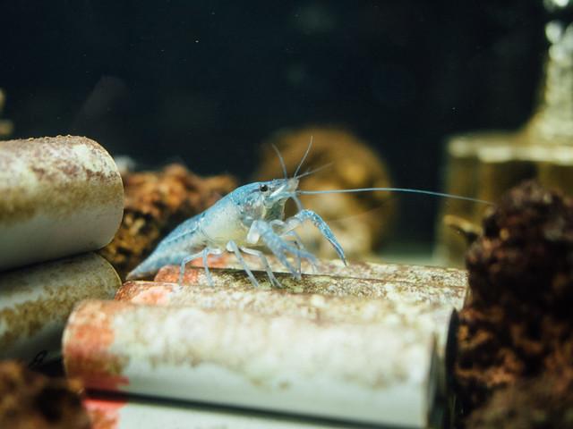 160810_takeshima_aquarium-20
