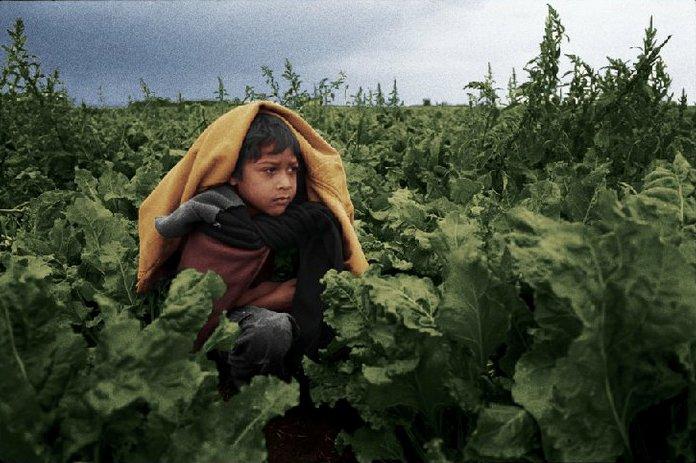 血汗童工劇照。圖片來源:The Harvest/La Cosecha