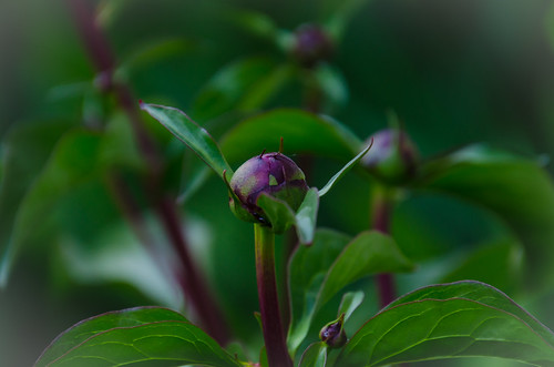 Waiting to Bloom | by Gregory Zenitsky | Witness of Light Photography