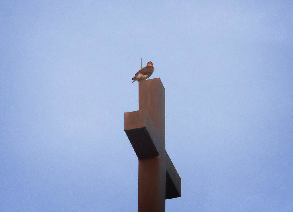 Fledgling atop Most Holy Redeemer