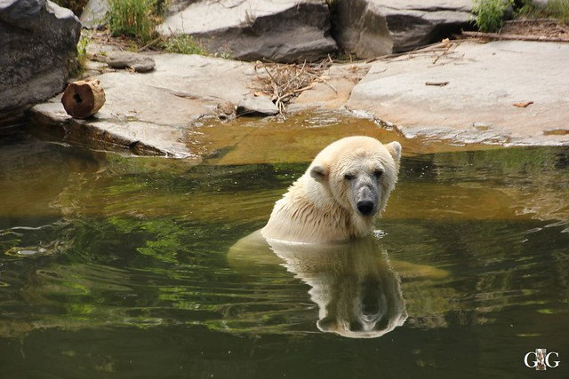Besuch Tierpark Friedrichsfelde 20.07.201622