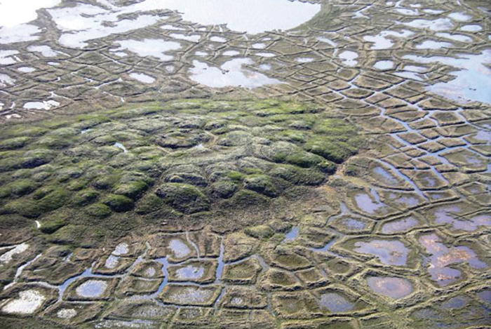 arctic tundra signature pattern of polygons