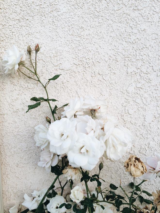 prune and grow