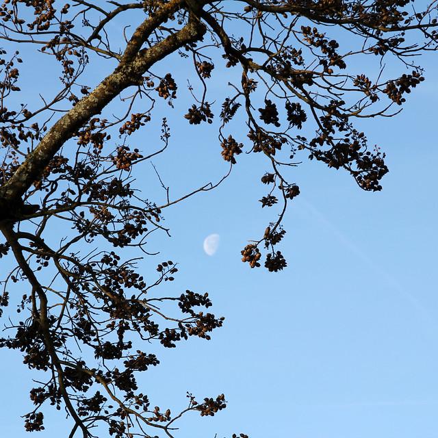 captured moon