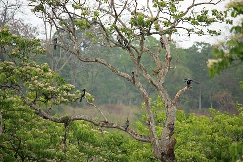 tree full of storks