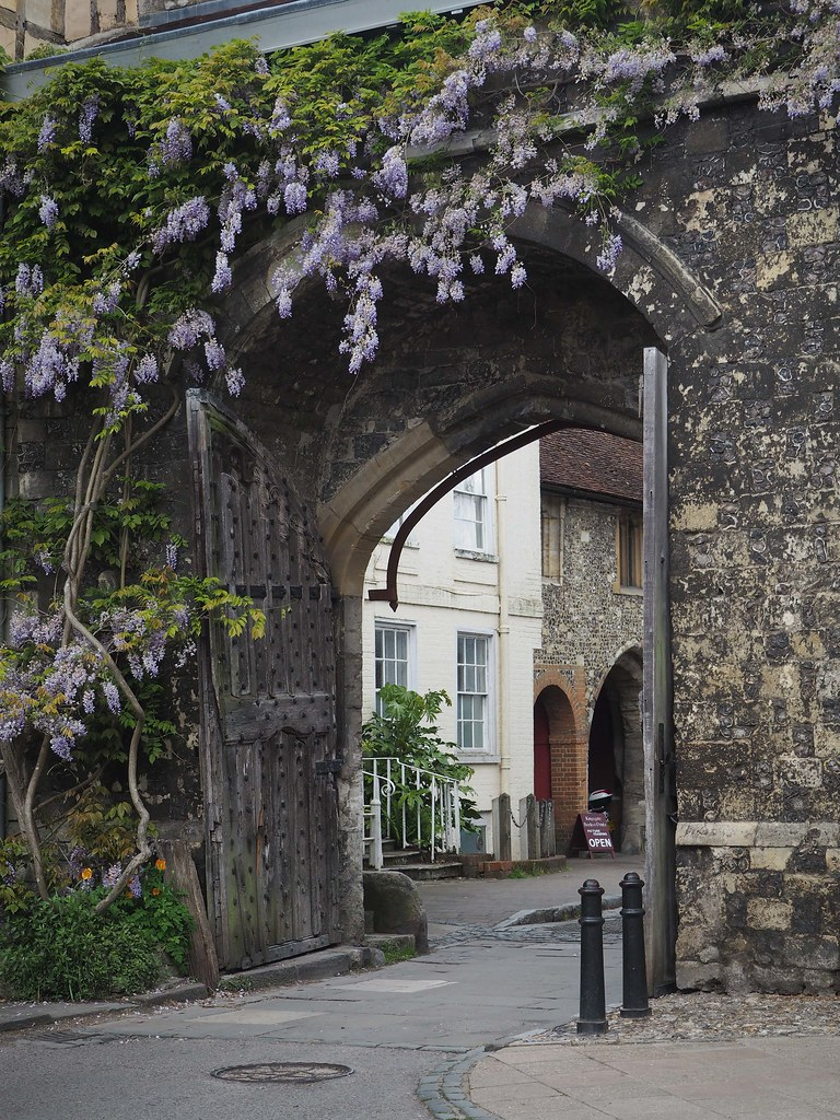 wisteria-cathedral3
