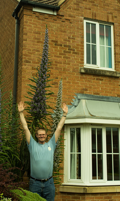 20150523-03_Me with Echium Pininana Plants in Flower