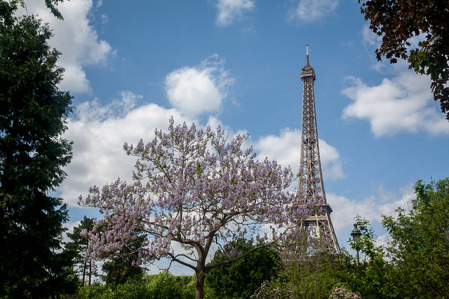 Eiffel Tower from Champ de Mars in Paris, France