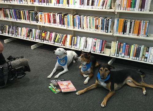 Reading to dogs - filmed for TVNZ breakfast show