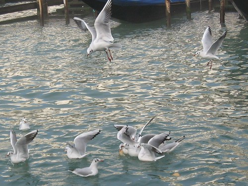 seagulls in Venice | by Carolina Victory