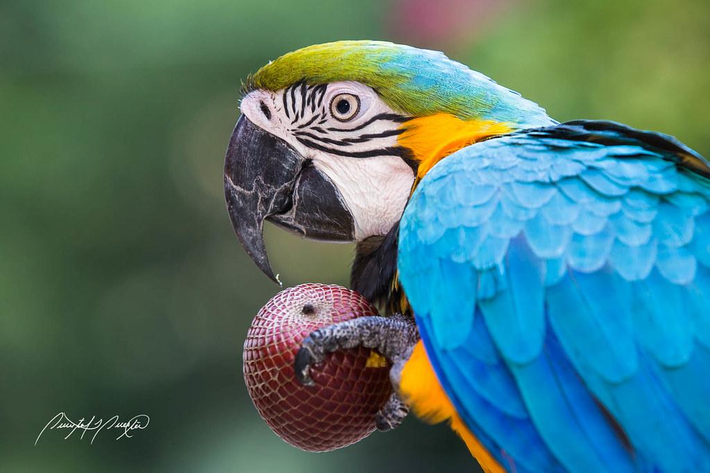 Macaw diet plan