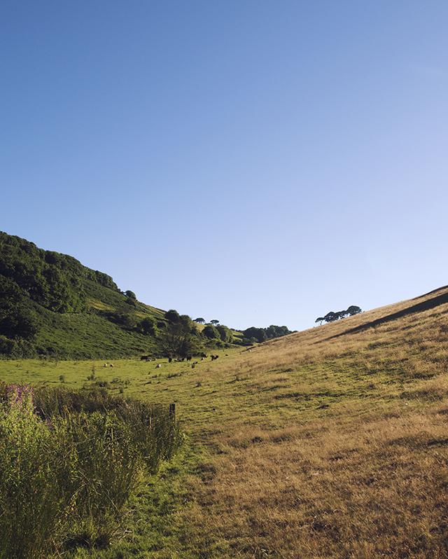 Walk to Mansands, Kinsgwear, Devon.