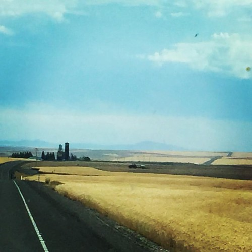 Amber waves of grain. Washington? Yes, Washington. #ontheroadagain #washington