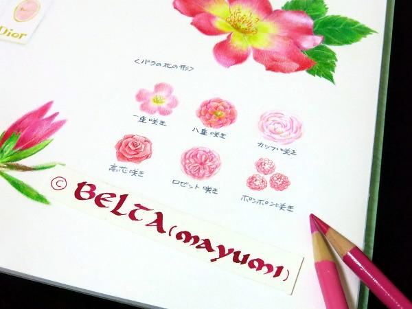 2015_05_15_rose_01_s