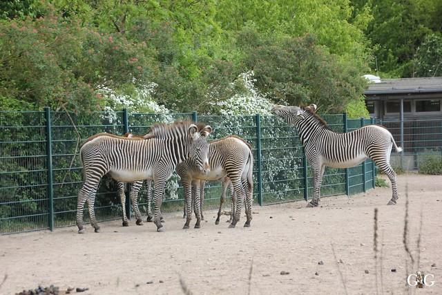 Tierpark Friedrichsfelde 17.05.201553