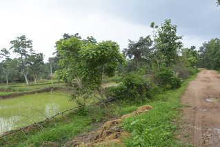 The proposed site for another dam near Maraskola village.