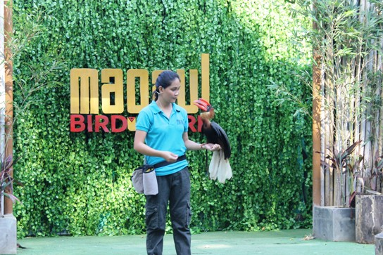 Jinkee of Magaul Bird Park, Subic