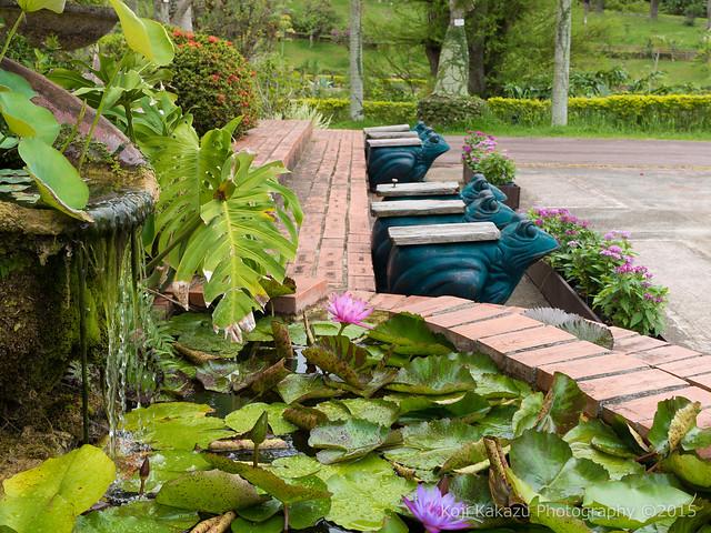 東南植物楽園-19