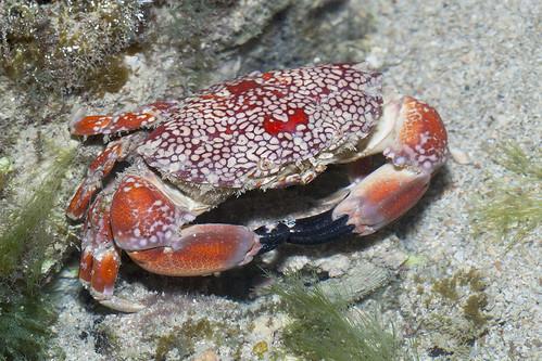 IMG_0088 mosaic crab