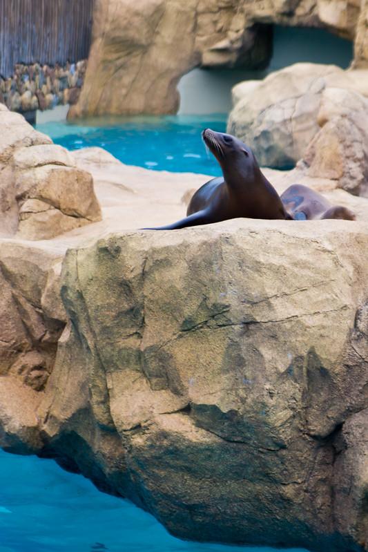 Sea Lion High-24.jpg