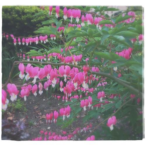 May 28 - Pink