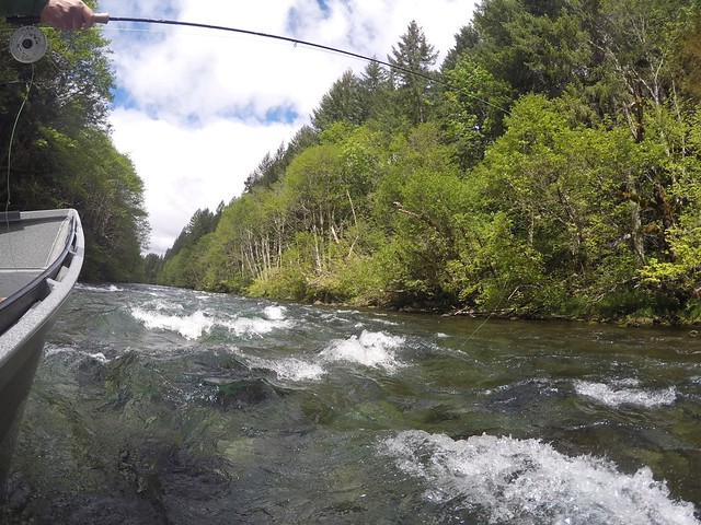 Mckenzie river fishing well spring 2015 the caddis fly for Mckenzie river fishing