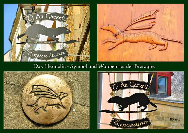 Das Hermelin (Hermine), Symbol und Wappentier der Bretagne ... Foto und Collagen: Brigitte Stolle 2016