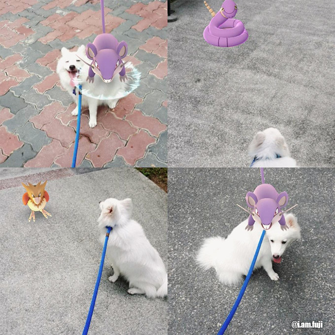 pokemon-go-sg-japanese-spitz-2