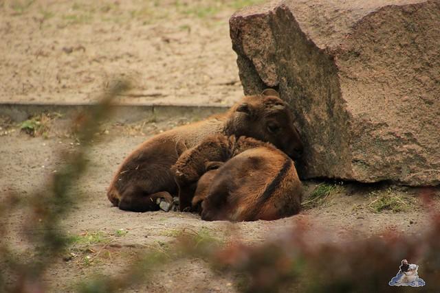 Tierpark Berlin 10.05.2015  67