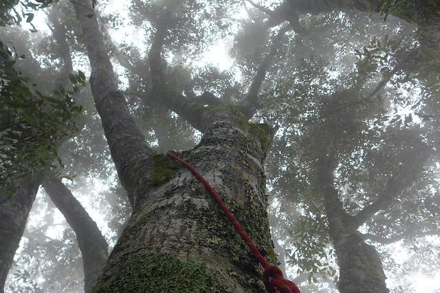 攀樹,不知不覺被雲霧籠罩住。圖片來源:陳雅得。