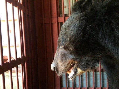 Song Sot in the transport cage (1)