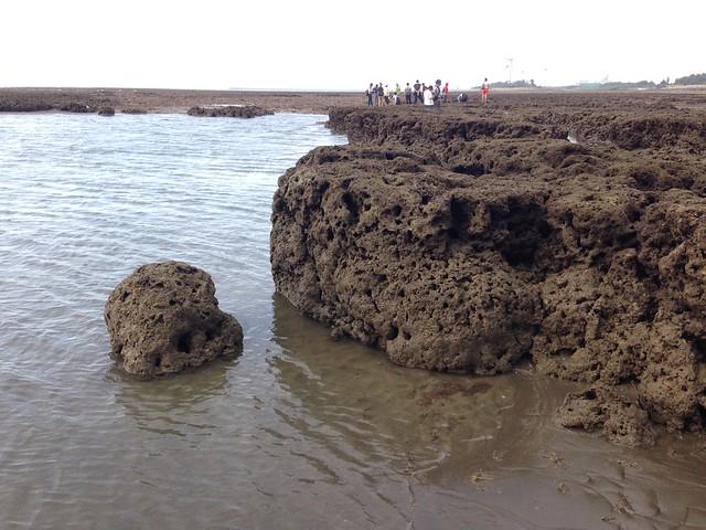 全國高中地球科學教師齊聚新屋海岸,一睹藻礁面貌。攝影:廖靜蕙
