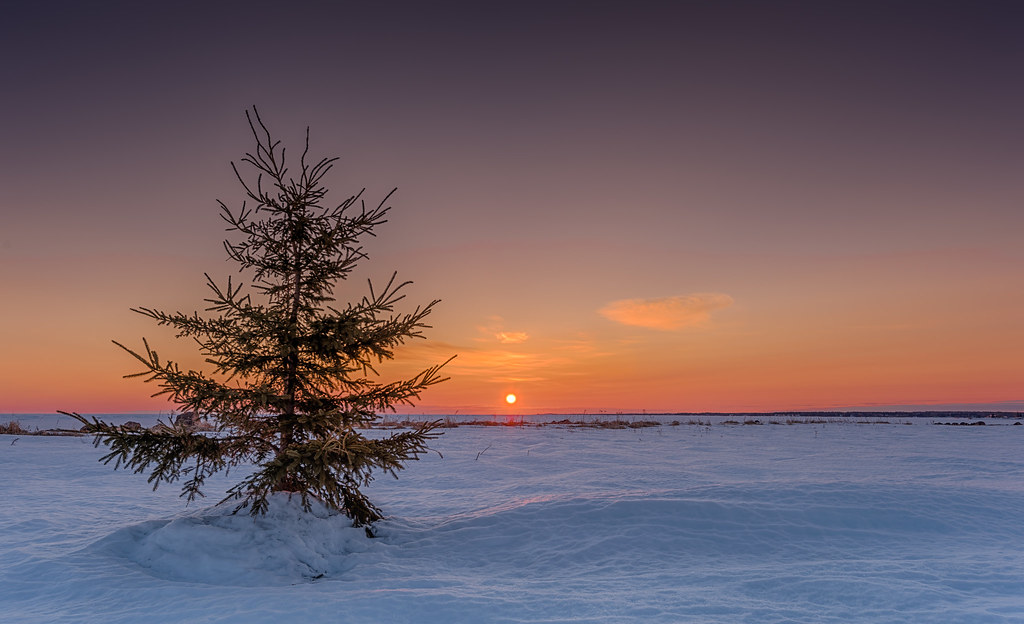 Lonely christmas tree looking out to the frozen sea in nb u flickr