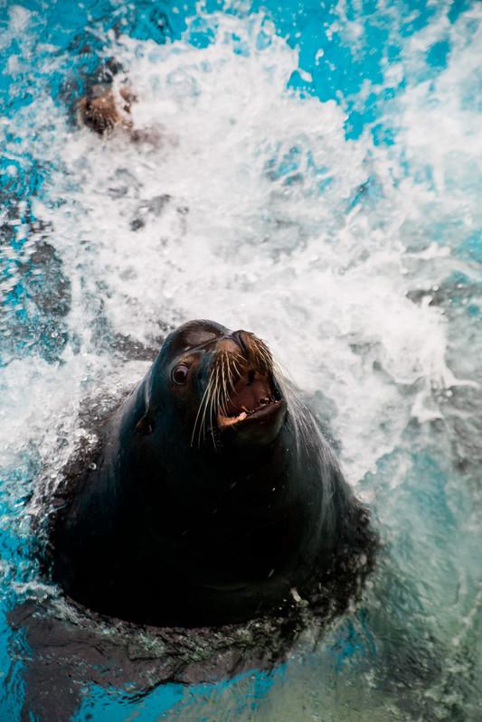 Sea Lion High-8.jpg