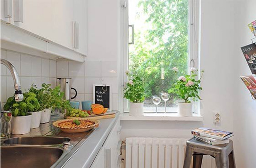Những vị trí đặt cây cảnh mang thiên nhiên vào nhà bạn-P2