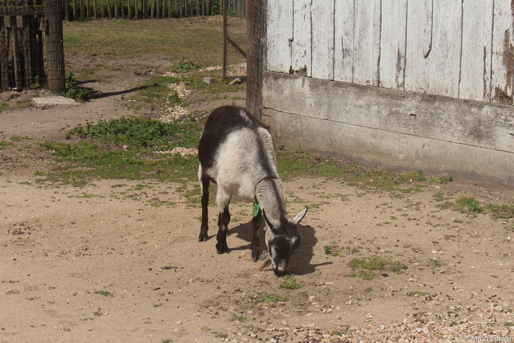 Wilder Ranch SP