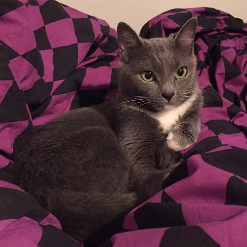 ❤️ #vainmomojutut #kissat #momoprinsessa #love #bluecat #cats #catsofinstagram #colours #colourlove #nofilter