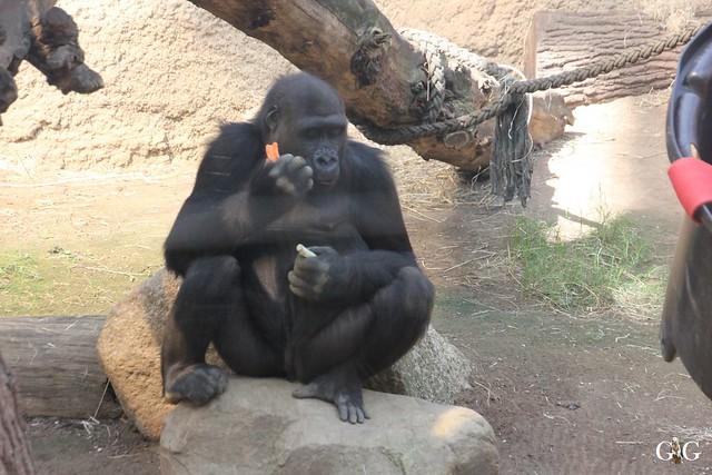 Zoo Rostock 03.05.2015 Teil 2.85