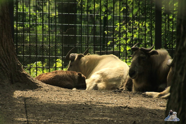 Tierpark Berlin 09.05.2015  103