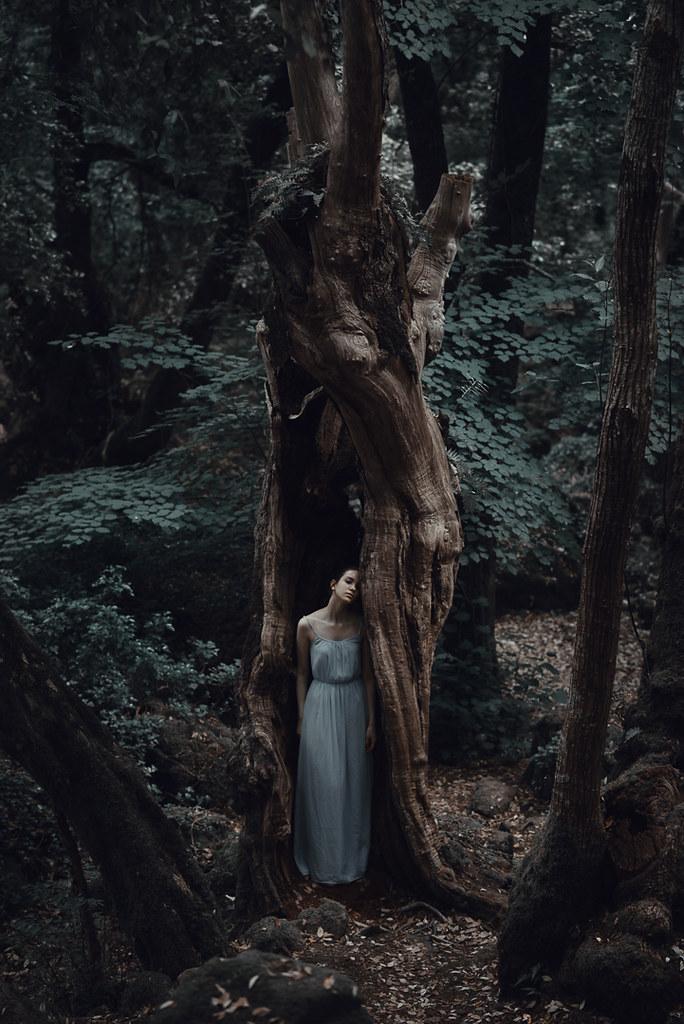 Dark Woods Facebook Tumblr Alessio Albi Flickr