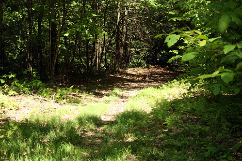 20150523_Camp_Creek_003