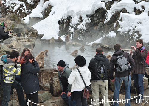Tourists around the snow monkey at the outdoor onsen at Jigokudani Monkey Park, Nagano